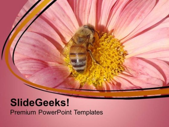 Honey Bee Sucking Nector Of Flower Powerpoint Templates Ppt