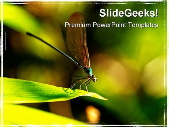 Insect Macro Laos Animals PowerPoint Themes And PowerPoint Slides 0211