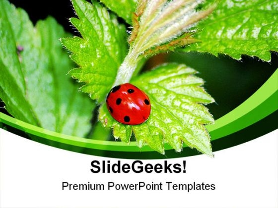 Lady Bird On Plant Nature PowerPoint Themes And PowerPoint Slides 0211