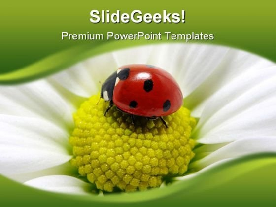 Lady Bug On Flower Animals PowerPoint Themes And PowerPoint Slides 0211