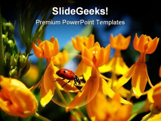 Lady Bug On Yellow Flowers Beauty PowerPoint Templates And PowerPoint Backgrounds 0211