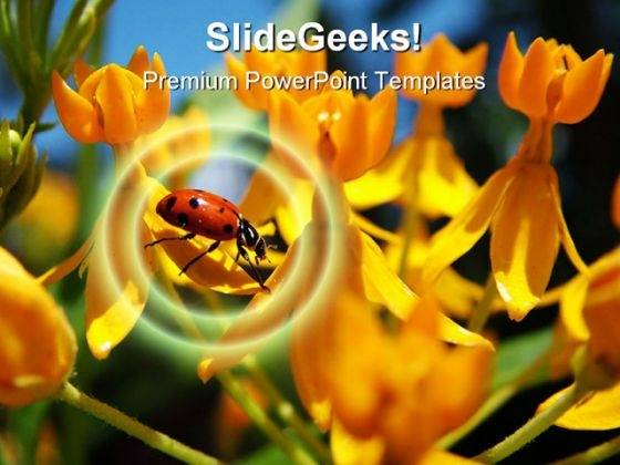 Ladybug Animal PowerPoint Template 1110