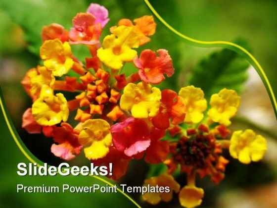 Lantana Nature PowerPoint Templates And PowerPoint Backgrounds 0311