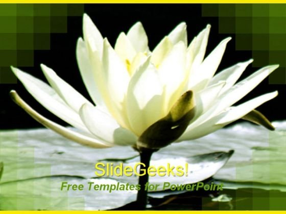 Beautiful Lily Flower PowerPoint Template