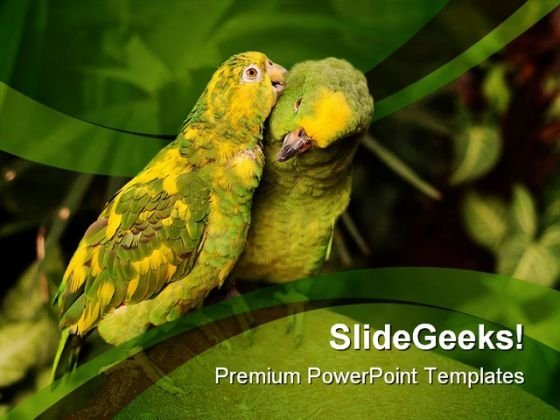 Love Birds Animals Nature PowerPoint Templates And PowerPoint Backgrounds 0111