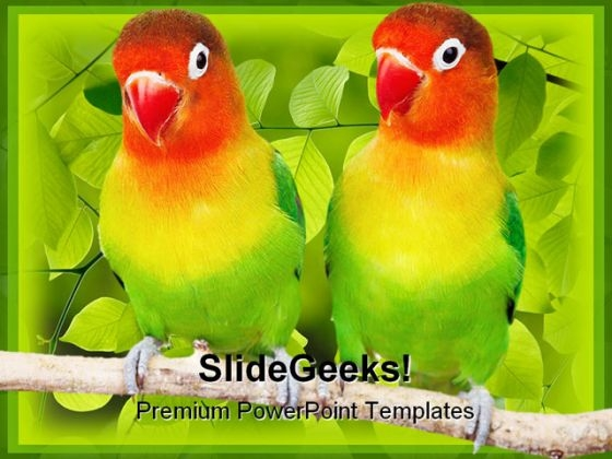 Love Birds Parrots Animals PowerPoint Templates And PowerPoint Backgrounds 0111