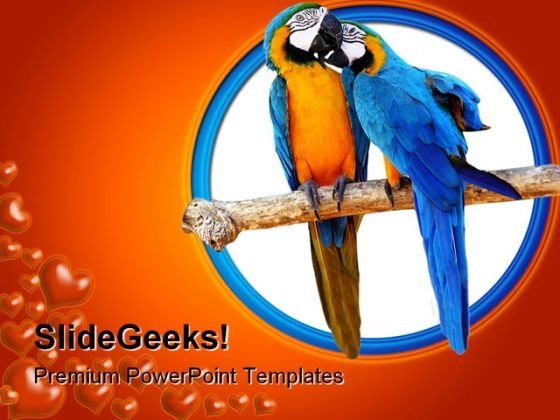 Love Parrots Animals PowerPoint Backgrounds And Templates 1210