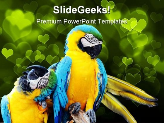 Loving Macaw Animals PowerPoint Templates And PowerPoint Backgrounds 0111