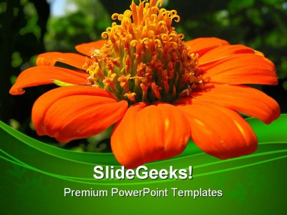 Mexican Sunflower Beauty PowerPoint Templates And PowerPoint Backgrounds 0311