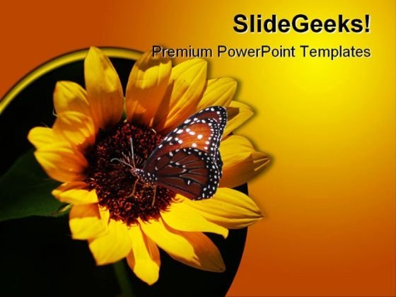 Miniature Sunflower Beauty PowerPoint Themes And PowerPoint Slides 0211