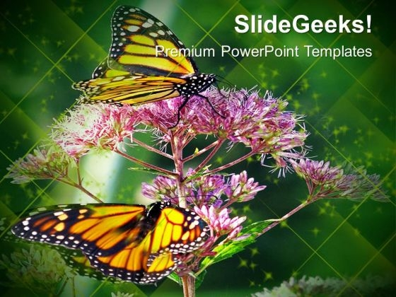 Monarch Butterfly Flowers Nature PowerPoint Templates Ppt Backgrounds For Slides 0213