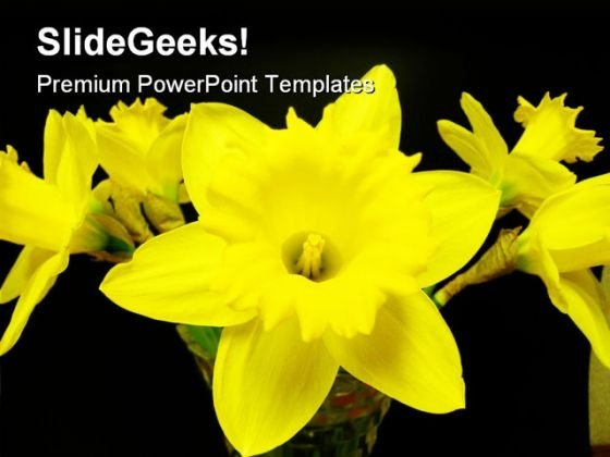 North West Daffodils Beauty PowerPoint Templates And PowerPoint Backgrounds 0311