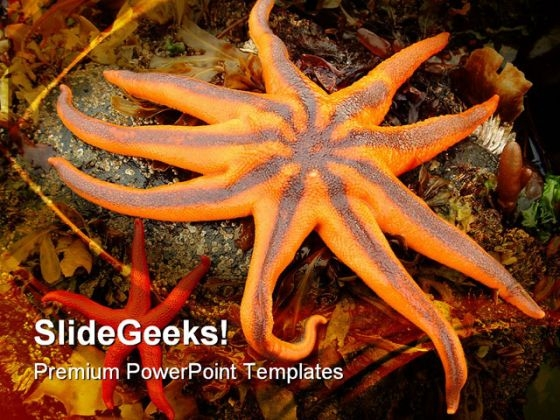 Northern Starfish Animals PowerPoint Themes And PowerPoint Slides 0511