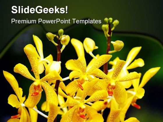 Orchids Flowers Beauty PowerPoint Backgrounds And Templates 0111