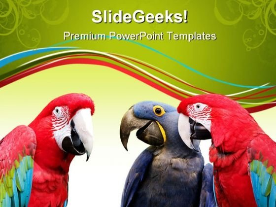 Parrot Meeting Animals PowerPoint Templates And PowerPoint Backgrounds 0611