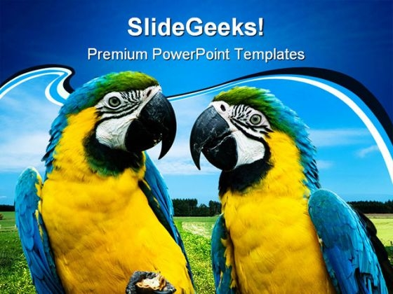 Parrots In Love Beauty PowerPoint Templates And PowerPoint Backgrounds 0211
