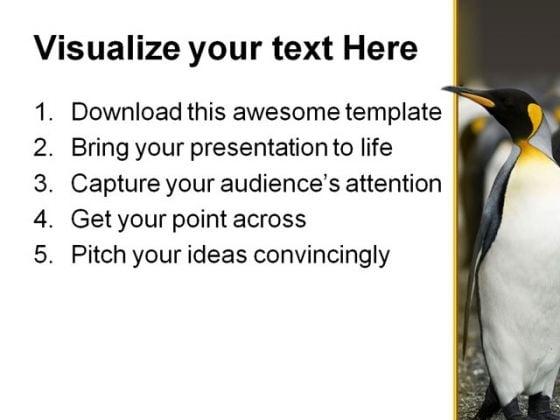 penguin animal powerpoint template 0810 - powerpoint themes, Modern powerpoint