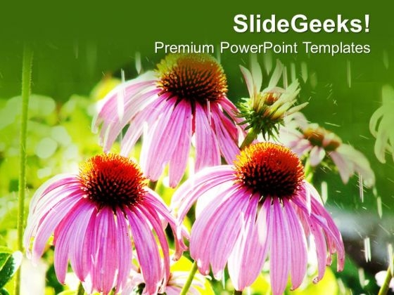 Pink Dahelia Flower With Beautiful Background PowerPoint Templates Ppt Backgrounds For Slides 0713