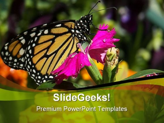 Pink Flower And Butterfly Beauty PowerPoint Themes And PowerPoint Slides 0211