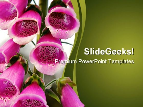 Pink Fox Glove Flower Beauty PowerPoint Templates And PowerPoint Backgrounds 0211