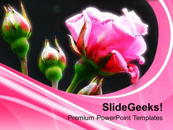 Pink Roses Flower Beauty PowerPoint Templates Ppt
