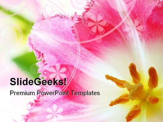 Pink Tulip Nature PowerPoint Themes And PowerPoint Slides 0211