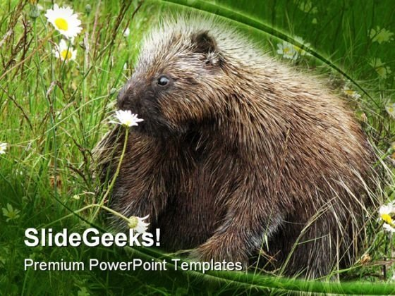Porcupine Animals PowerPoint Themes And PowerPoint Slides 0211