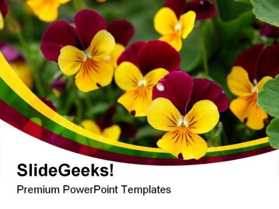 Purple Yellow Pansies Beauty  PowerPoint Templates And PowerPoint Backgrounds 0211