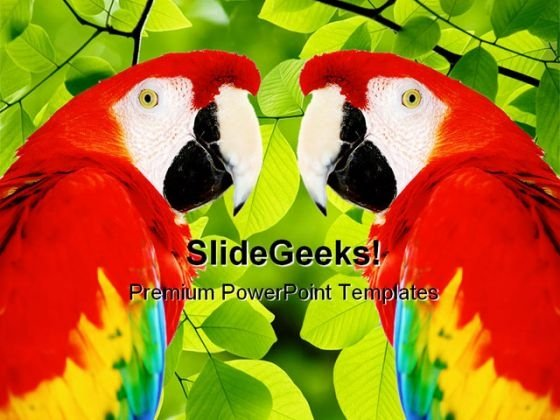 Red Macaw Animals PowerPoint Template 0910