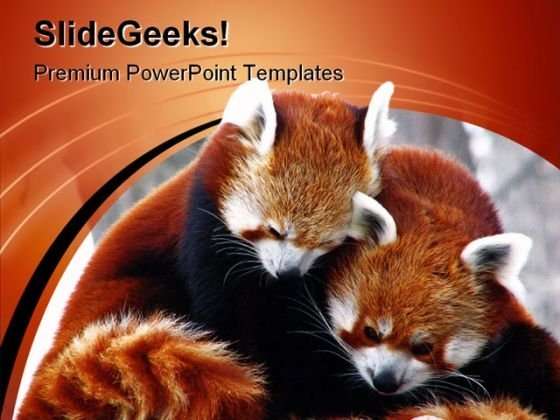Red Pandas Cuddling Animals PowerPoint Themes And PowerPoint Slides 0211