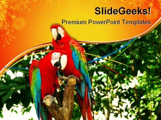 Red Parrots Animals PowerPoint Templates And PowerPoint Backgrounds 0611