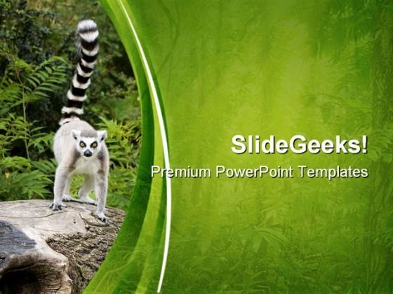 Ring Tailed Lemur On Tree Animals PowerPoint Templates And PowerPoint Backgrounds 0611