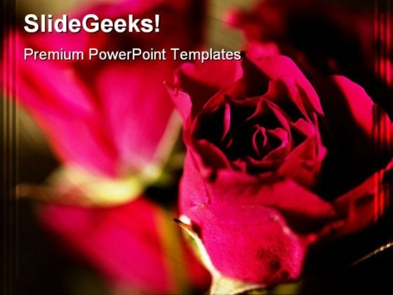 Roses Beauty PowerPoint Templates And PowerPoint Backgrounds 0311