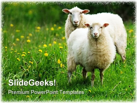 Sheep In Dandelion Field Animals PowerPoint Templates And PowerPoint Backgrounds 0211