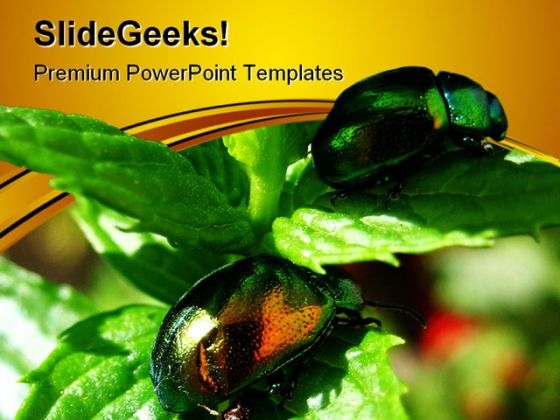 Shiny Beetles On Mint Leaves Nature PowerPoint Templates And PowerPoint Backgrounds 0611