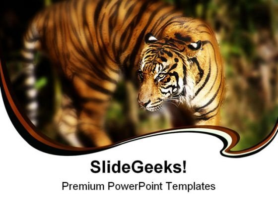 Siberian Tiger Animals PowerPoint Templates And PowerPoint Backgrounds 0211
