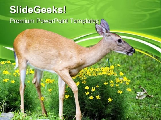 Spring Deer Animals PowerPoint Themes And PowerPoint Slides 0611