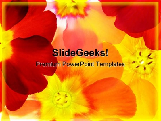 Spring Primula Beauty PowerPoint Templates And PowerPoint Backgrounds 0311
