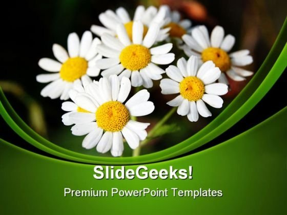 Summer Daisies Nature PowerPoint Templates And PowerPoint Backgrounds 0311