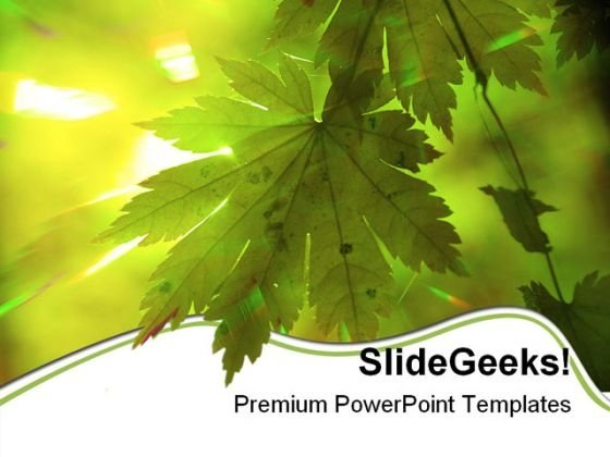 Summer Forest Rays Nature PowerPoint Themes And PowerPoint Slides 0511