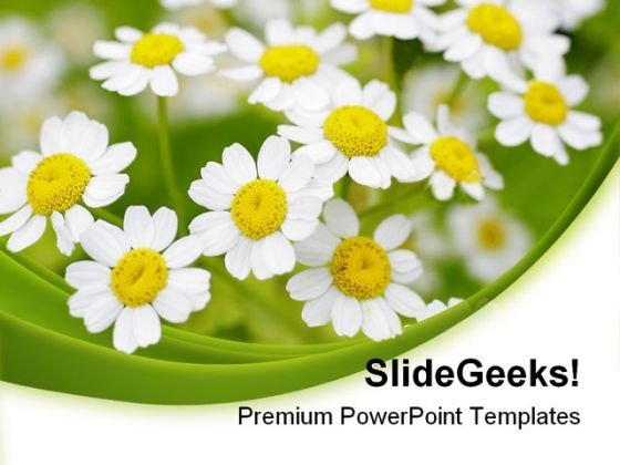 summer time daisies nature powerpoint templates and powerpoint