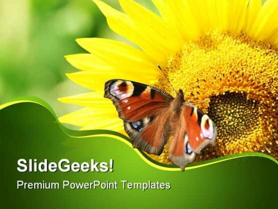 Sunflower With Butterfly Nature PowerPoint Templates And PowerPoint Backgrounds 0211