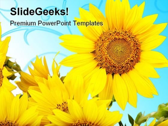 Sunflowers Beauty PowerPoint Templates And PowerPoint Backgrounds 0311
