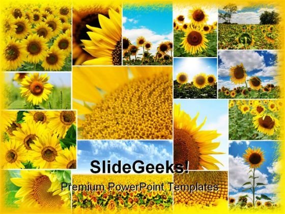 sunflowers collage beauty abstract powerpoint templates and