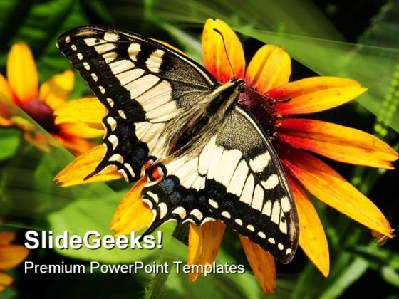 Swallowtail Butterfly Animals PowerPoint Templates And PowerPoint Backgrounds 0111