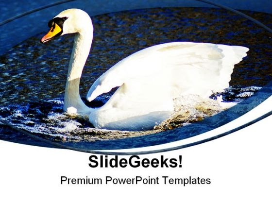 Swan Animals PowerPoint Themes And PowerPoint Slides 0411