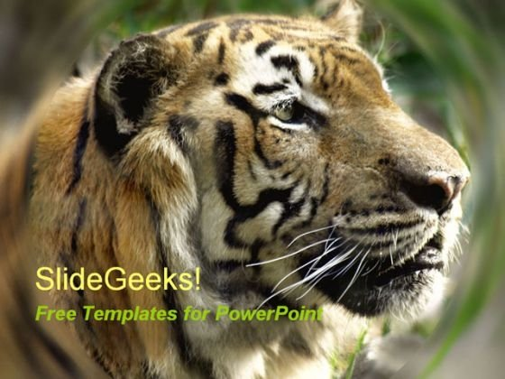 Tiger PowerPoint Template