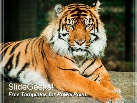 Tiger 0809