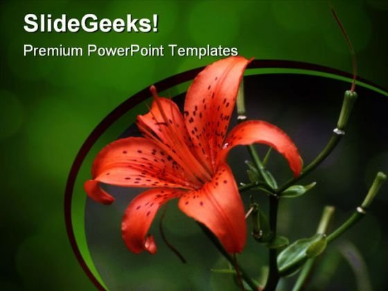 Tiger Lily Beauty PowerPoint Templates And PowerPoint Backgrounds 0311