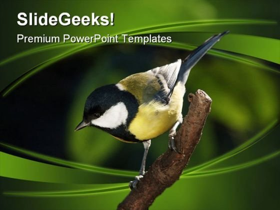 Tomtit On Branch Nature PowerPoint Themes And PowerPoint Slides 0211